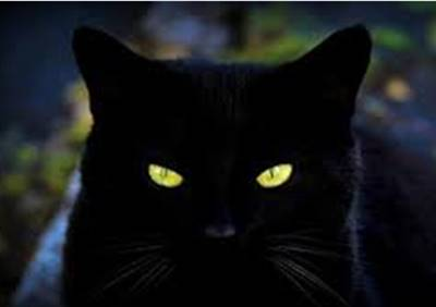 Hewan Bisa Melihat Penampakan Hantu